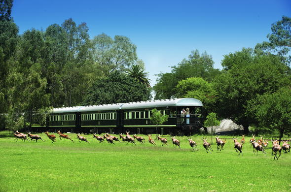 See wildlife on your train safari.